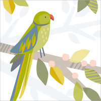 FP5084 Green Parakeet