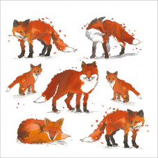 FP5107 Foxes