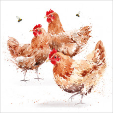 FP5163 Chickens