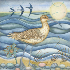 FP5164 Curlew