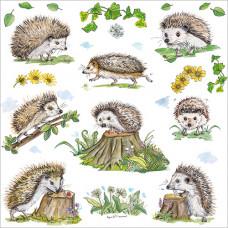 FP6179 Hedgehogs
