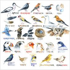 FP6180 Bird Alphabet