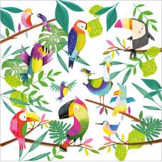 FP6182 Exotic Birds