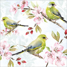 FP6196 Blossom and Greenfinches
