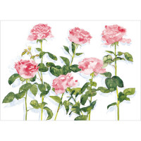 A211 Pink Roses