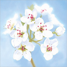 FP5116 White Blossoms