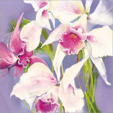 FP5143 Orchids