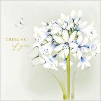 FP6216 White Agapanthus (Thinking of You)