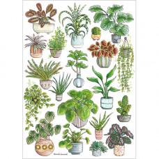 FP7051 Houseplants