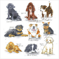 WS484 Puppies