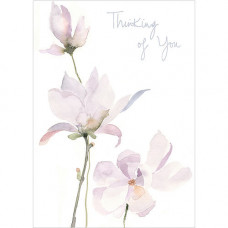 A259 Thinking of You Magnolias